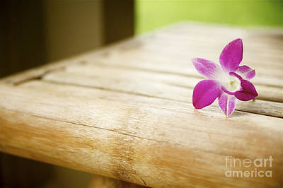 Photograph - Tabletop Orchid by Kicka Witte - Printscapes
