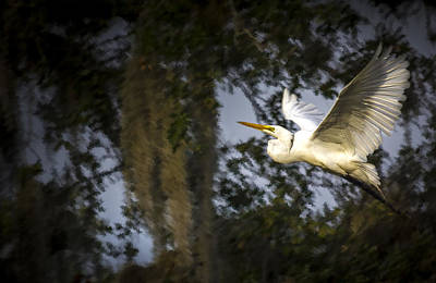 Egret Landscape Photograph - Take Flight by Marvin Spates