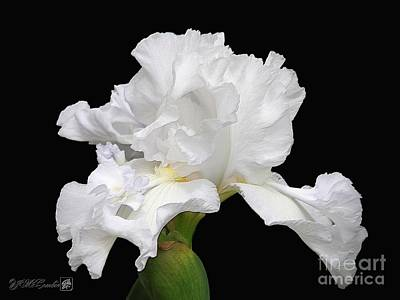 Photograph - Tall Bearded Iris Named Mesmerizer by J McCombie