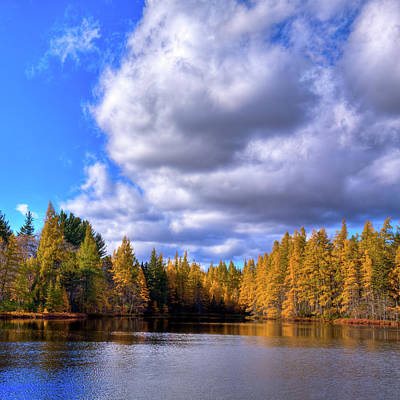Photograph - Tamaracks At Woodcraft Camp by David Patterson