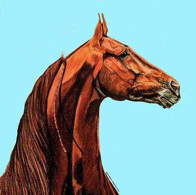 Drawing - Tango's Daylight Saddlebred Stallion by Cheryl Poland