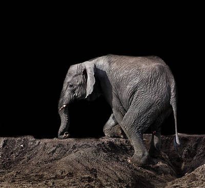 Photograph - Tanzanian Elephant by Helene Wallaert and Remy Simon
