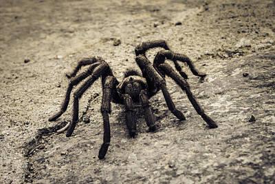 Photograph - Tarantula by Donna Miller