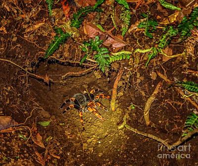 Photograph - Tarantula by Patricia Hofmeester