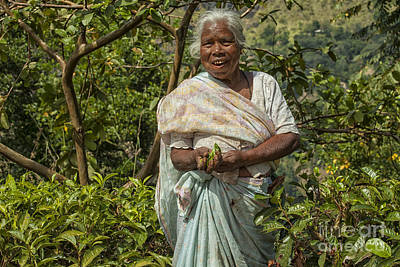 Photograph - Tea Picker In Sri Lanka by Patricia Hofmeester