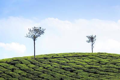 Kerala Photograph - Tea Planation In Kerala - India by Joana Kruse