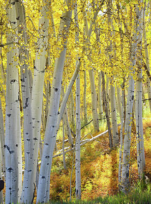 Print featuring the photograph Telluride Aspens by Ray Mathis