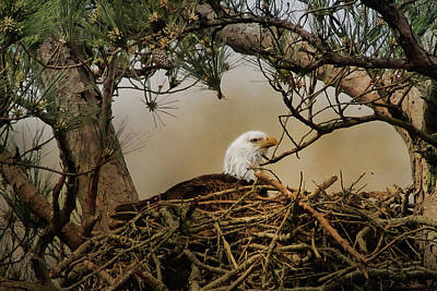 Digital Art - Tending The Nest by TnBackroadsPhotos
