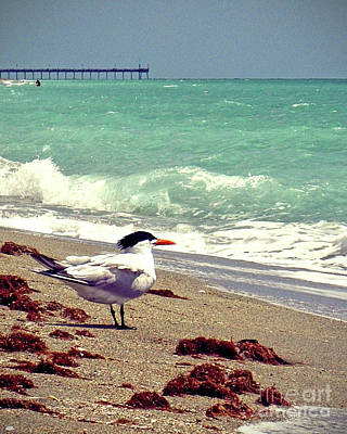Terns On The Beach Art Print by Chris Andruskiewicz