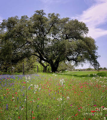 Photograph - Texas Wildflowers by Cathy Alba