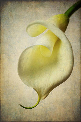Textured Calla Art Print by Garry Gay