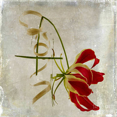 Inboard Photograph - textured Gloriosa Lily. by Bernard Jaubert