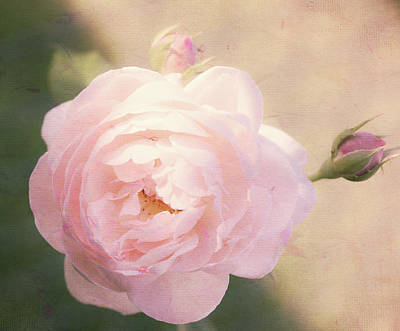 Reptiles - Textured Rose by Cathy Donohoue