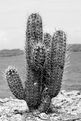 Photograph - The Almost Perfect Cactus by For Ninety One Days
