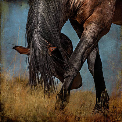 Photograph - The Angles Of A Horse by Mary Hone