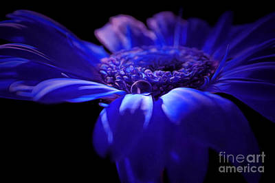 Flowers And Water Drops Wall Art - Photograph - The Awakening by Krissy Katsimbras