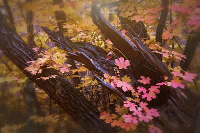Photograph - The Beauty Of Autumn  by Saija Lehtonen