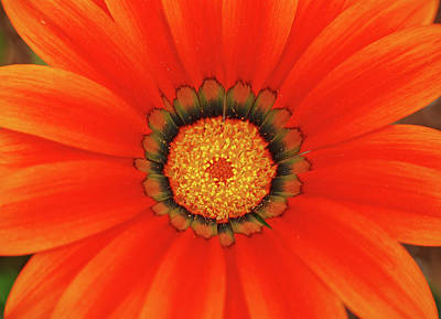 The Beauty Of Orange Art Print by Lori Tambakis