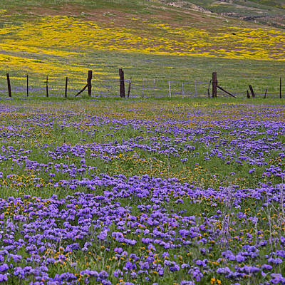 Fiddleneck Photograph - The Beauty Of The Carrizo Plain 2  by Kathy Yates
