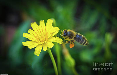 Photograph - The Bee by Mitch Shindelbower