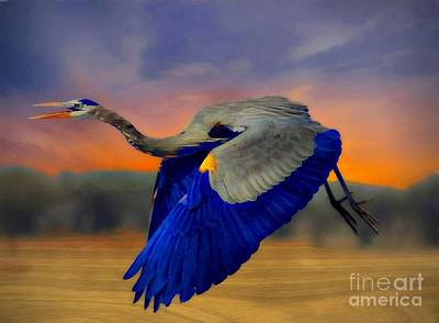 Photograph - The Blue Heron by John Kolenberg