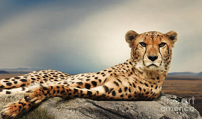 Photograph - The Cheetah by Christine Sponchia