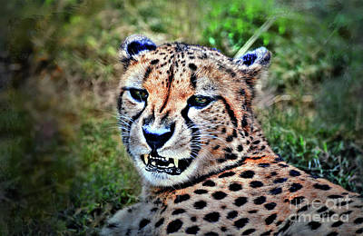 Photograph - The Cheetah by Savannah Gibbs