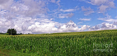 Photograph - The Corn Field by Paul Mashburn