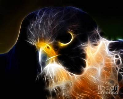 Flying Hawk Digital Art - The Falcon by Wingsdomain Art and Photography