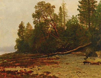 Painting - The Fallen Tree by Albert Bierstadt