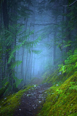 Photograph - The Forest Blues by Tara Turner
