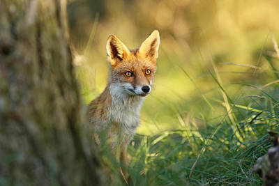 The Fox And The Light Art Print by Roeselien Raimond
