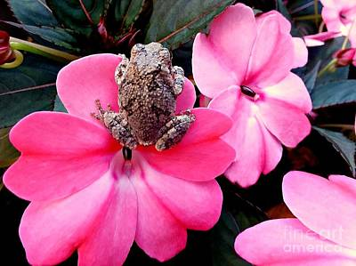 Photograph - The Frog And The Flower by Barbara S Nickerson