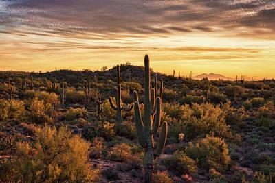 Photograph - The Golden Desert  by Saija Lehtonen