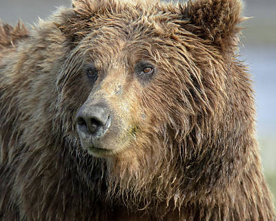 Photograph - The Great Bear by Jack Bell