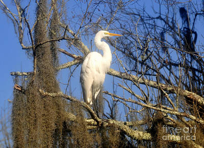 Photograph - The Great Egret  by David Lee Thompson