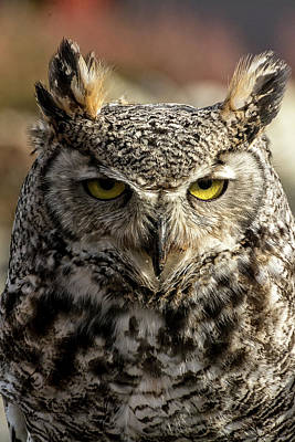 Photograph - The Great Horned Owl by Sabine Edrissi