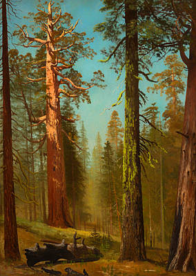 Sequoia Painting - The Grizzly Giant Sequoia - Mariposa Grove California by Mountain Dreams