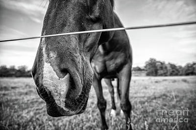 Photograph - the Horses of Blue Ridge 4 by Blake Yeager