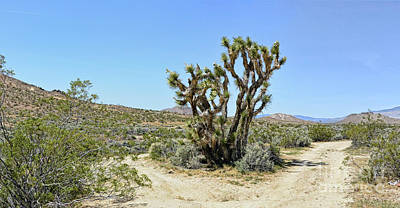 Photograph - The Joshua Tree by Joe Lach
