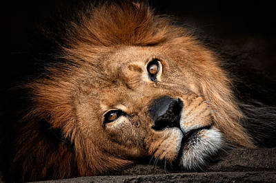 Photograph - The King  by Emmanuel Panagiotakis