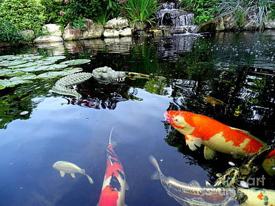 Photograph - The Koi Pond by Ed Weidman