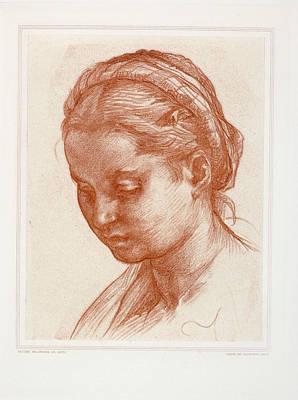 Sarto Painting - The Lady by Andrea Del Sarto