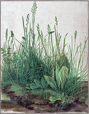 Painting - The Large Piece Of Turf   by Albrecht Durer