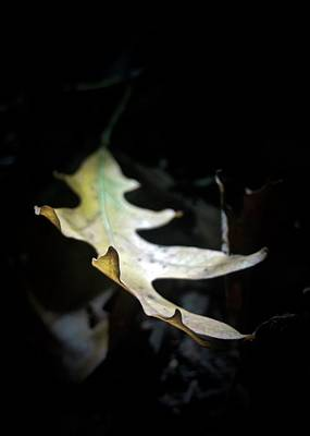 Photograph - The Leaf by Photography by Tiwago