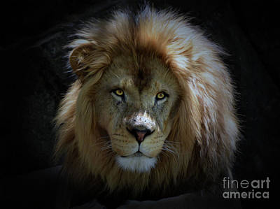 Photograph - The Lion by Savannah Gibbs