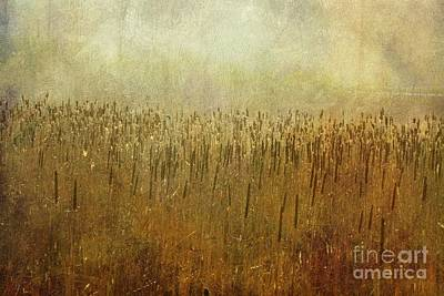 Photograph - The Marsh by Mary Machare