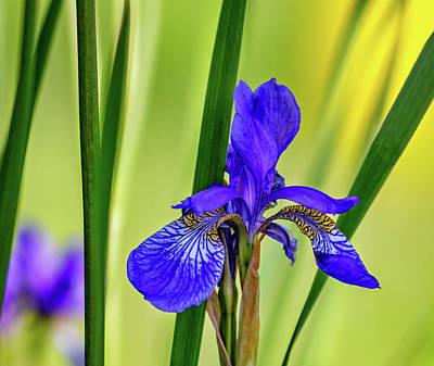 Fleur De Lis Photograph - The Mystery Of Spring 2 by Steve Harrington