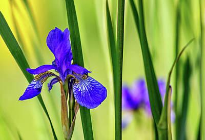 Fleur De Lis Photograph - The Mystery Of Spring by Steve Harrington