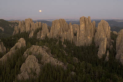The Needles Protrude From Forests Art Print by Phil Schermeister